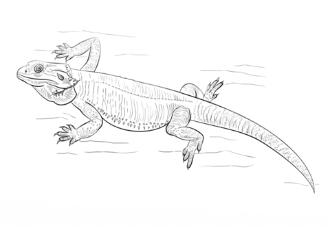 Related Image Dragon Drawing Bearded Dragon Dragon Coloring Page