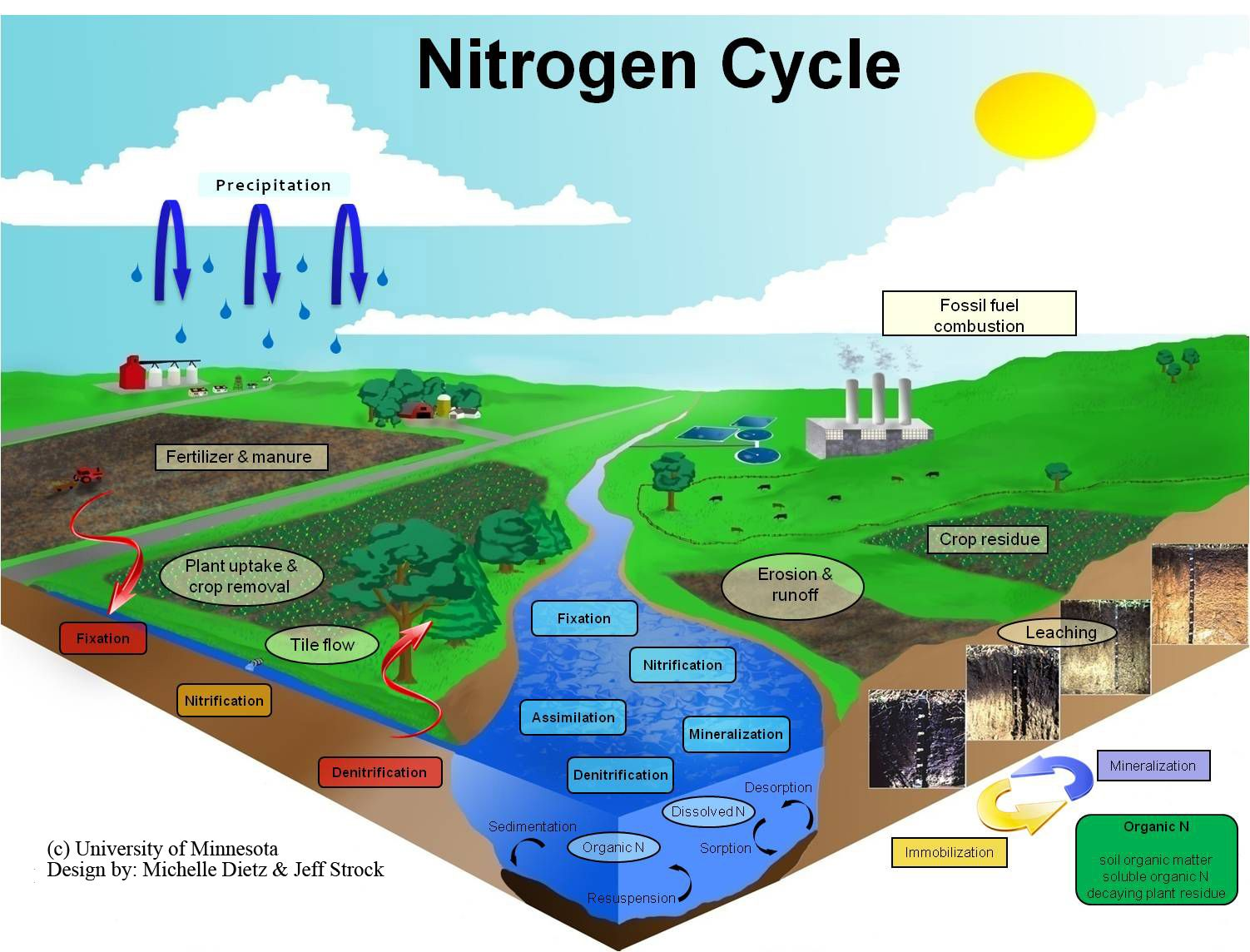 Nitrogen Cycle Nitrogen Cycle Nitrogen Carbon Sequestration