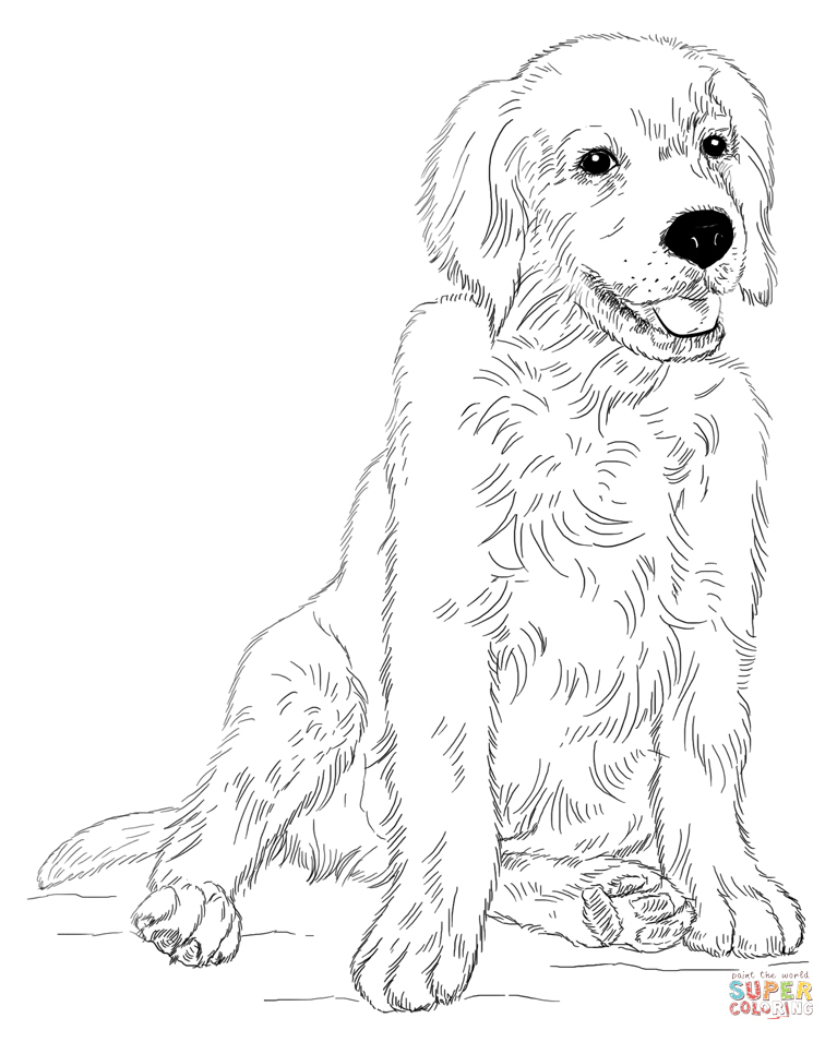 Golden retriever puppy Super Coloring Dibujos, Reto de
