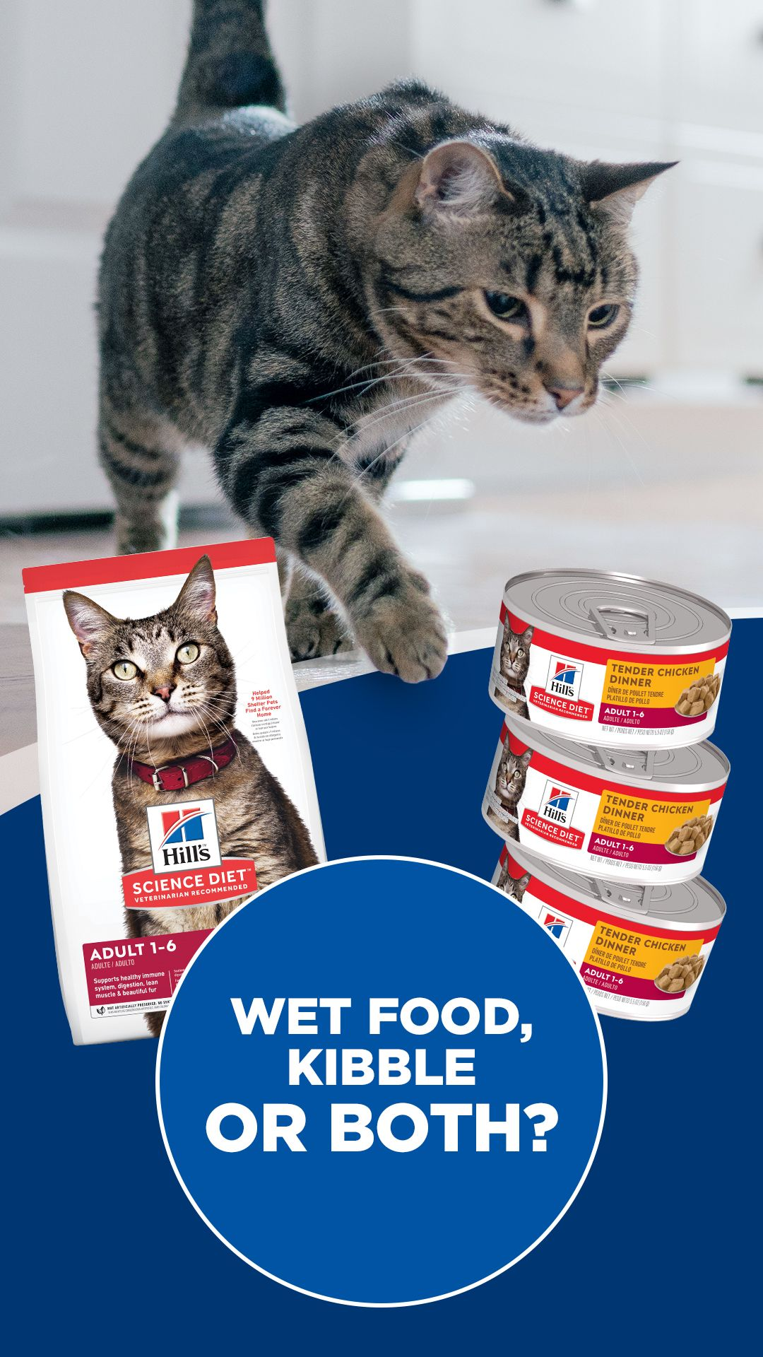 Mixing Wet And Dry Pet Food Properly Hill S Pet In 2020 Wet Cat Food Kitten Care Pet Care