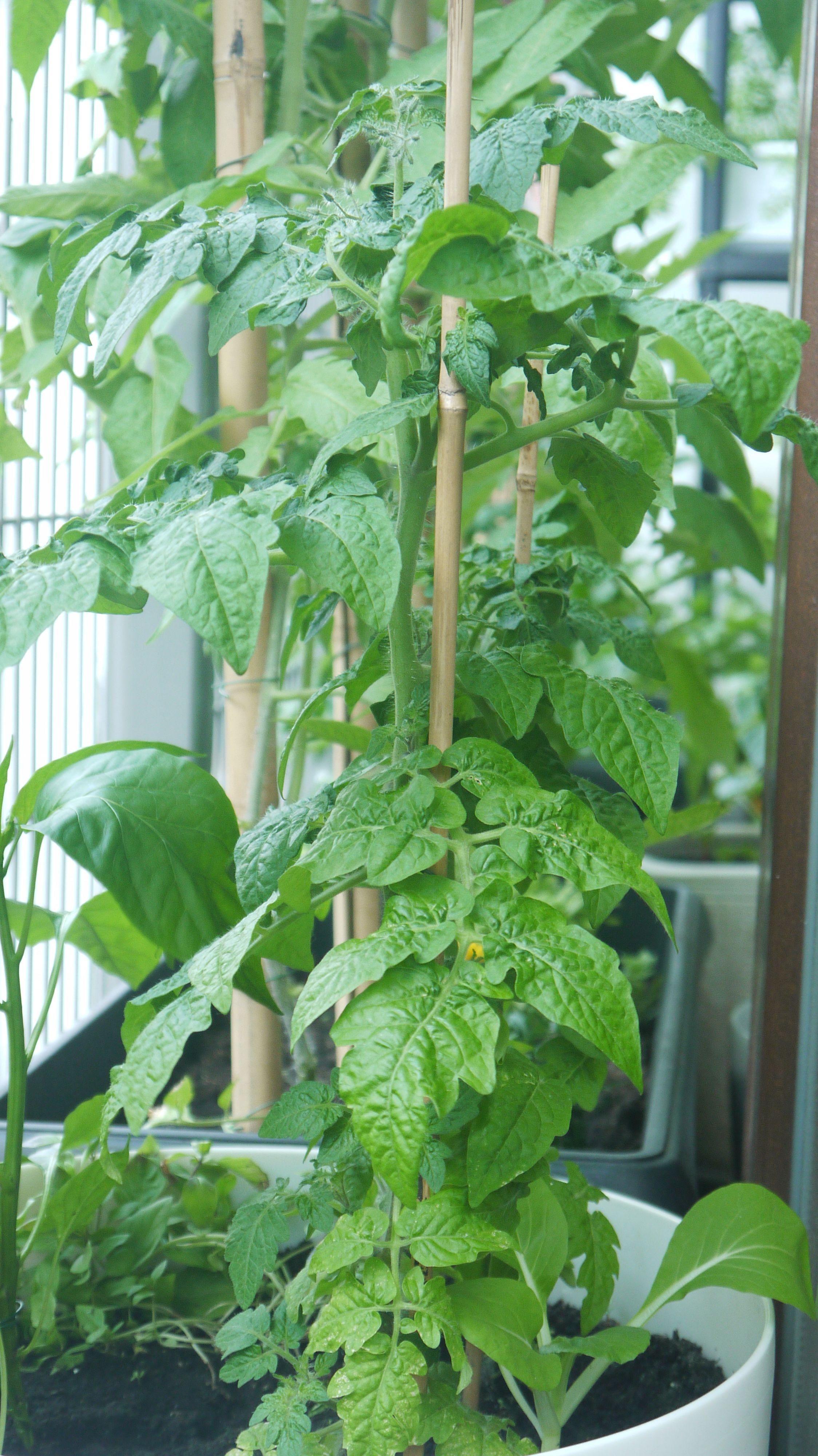 Własne Warzywa W Doniczce Ogród W Doniczkach Ogród