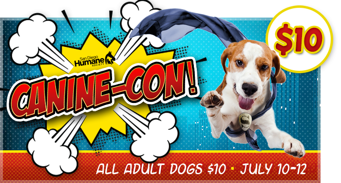 Comic Con Pet Adoption Campaign