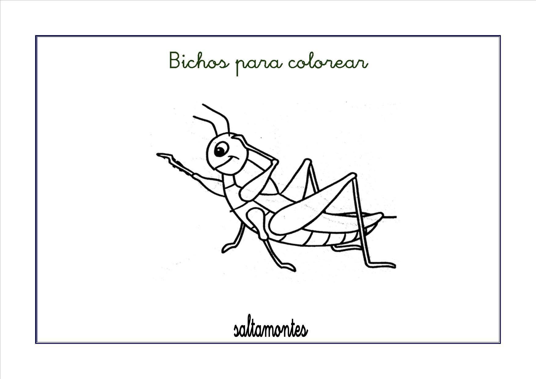 Pin De Carol Oviedo En Insectos Bichos Fichas Y Dibujos