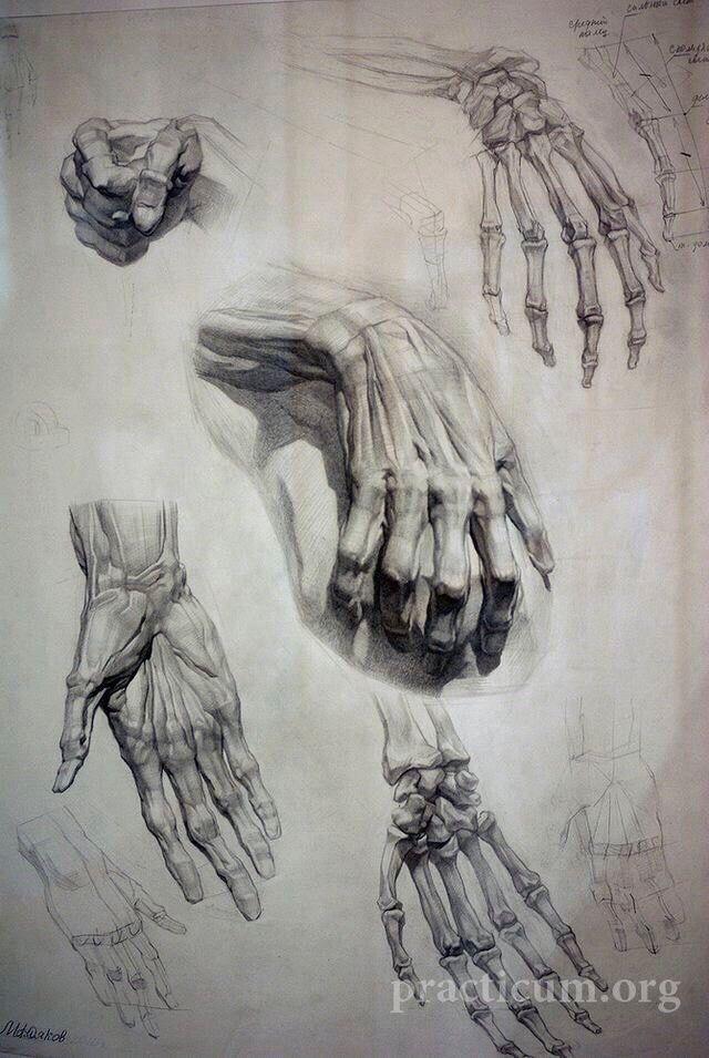 Pin by GKot on Тутор   Pinterest   Anatomy, Human anatomy and Draw