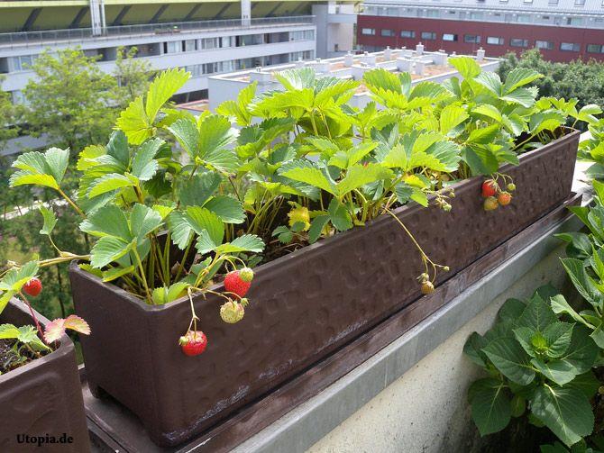 Gemuse Auf Dem Balkon Hochbeet Garten ? Blessfest.info Gemuse Auf Dem Balkon Hochbeet Garten