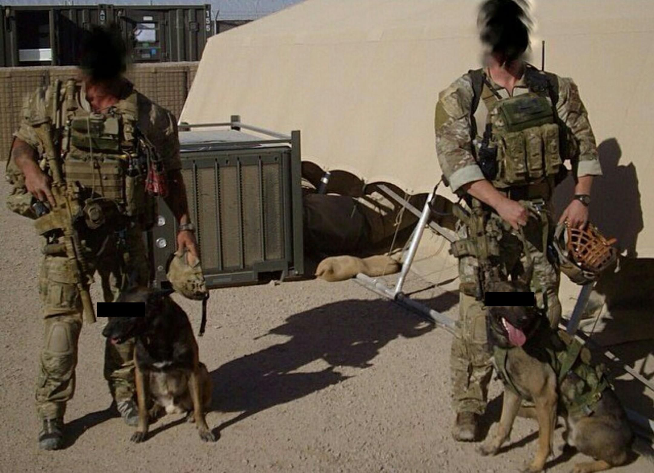 Two working Dogs with the British SAS. [21601564
