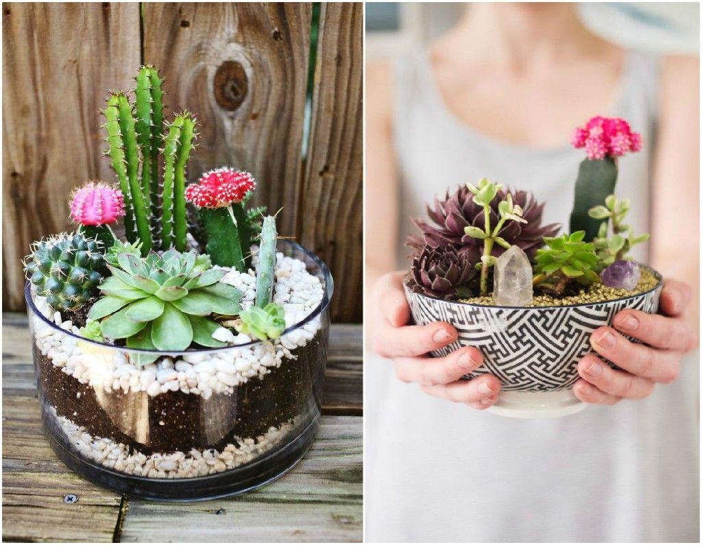 Cactus y suculentas con cristales - Decoracion para terrarios ...