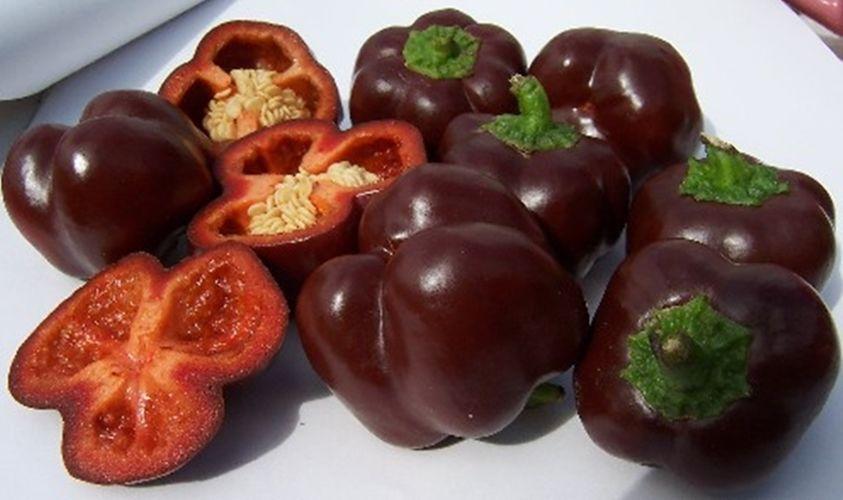 NON GMO PEPPER SWEET PEPPER MINI BELL CHOCOLATE 60 SEEDS ORGANIC