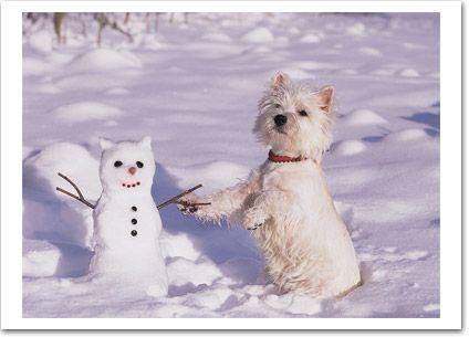 """Schaut alle her, was ich mir für einen hübschen Schneemann gebaut habe. Getauft ist er auch schon, mein Freund """"Frosty"""". ⛄"""