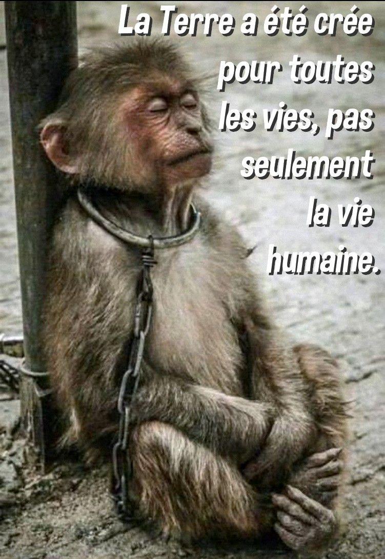 Animal Cruelty Quotes Pinjésus On Animaux Magnifiques Et Pas Que.♡♡♡  Pinterest