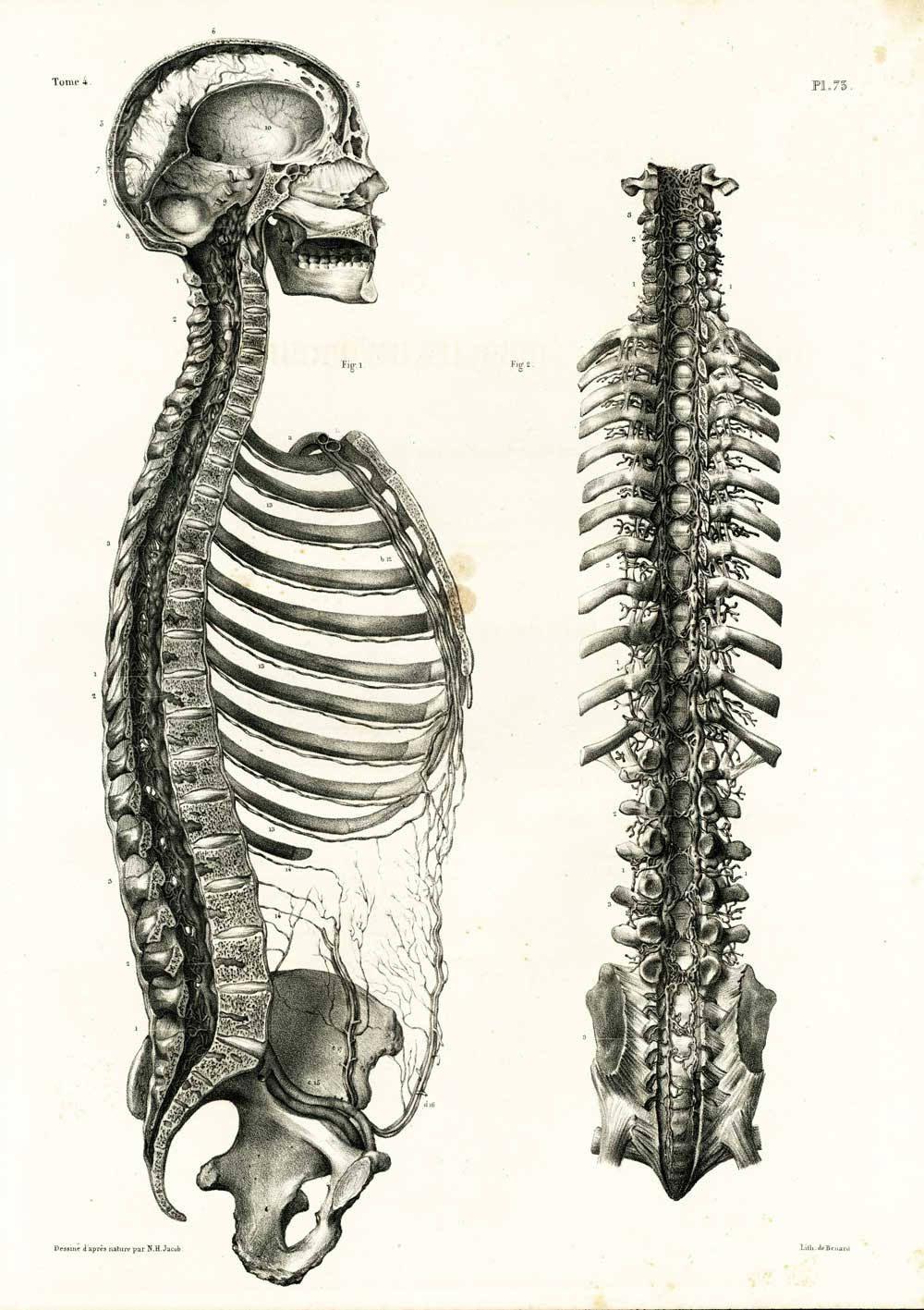 1836 XL Antique Vertebral Column Print, Spine Blackbone Anatomy ...