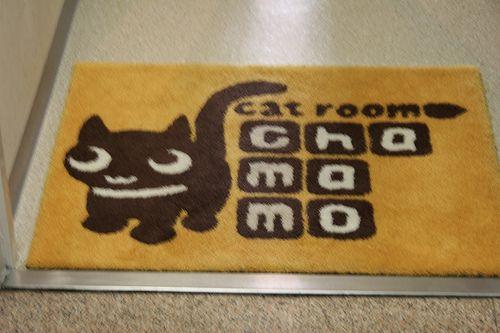 A cat room rug!