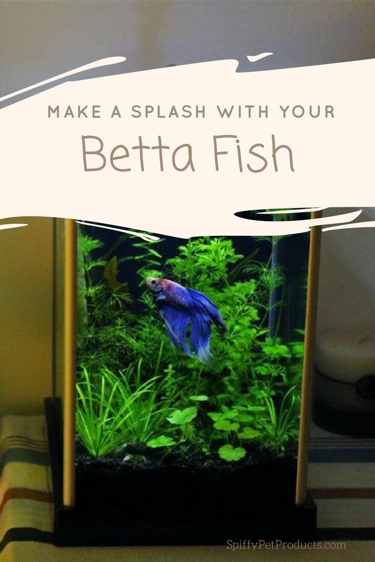 Betta Fish Tank Setup Ideas That Make A Statement Spiffy Pet Products Betta Fish Betta Fish Tank Betta