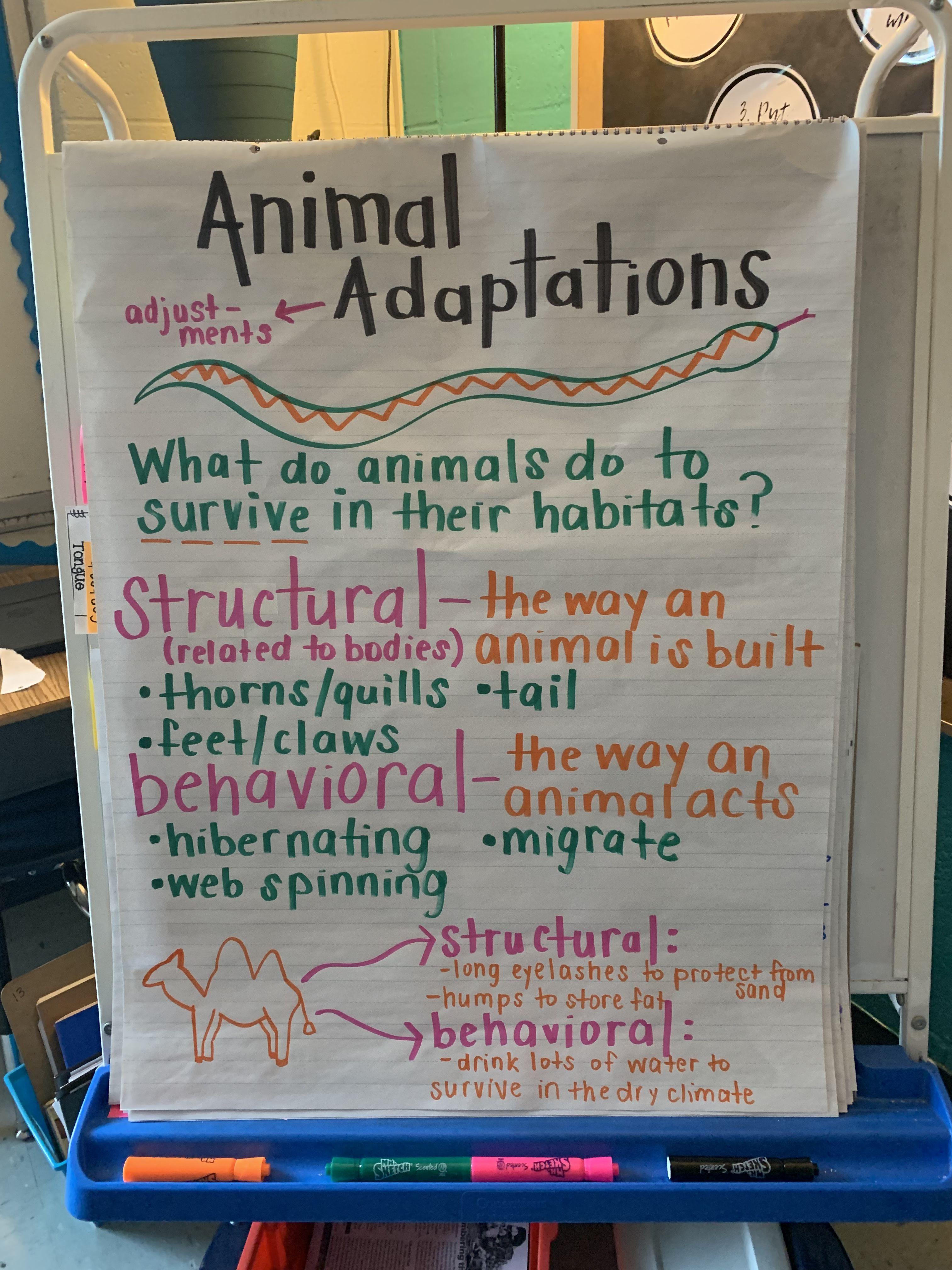Animal Adaptations Anchor Chart 3rd Grade