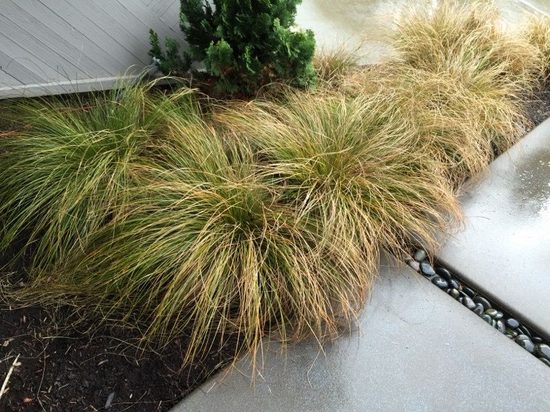 how long does it take grass seed to germinate fescue