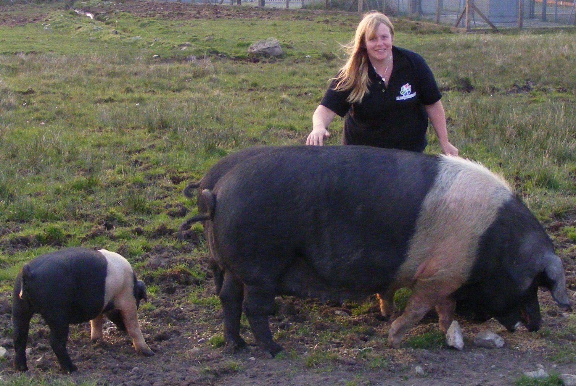 модель самая большая свинья в мире фото жене это идеальное