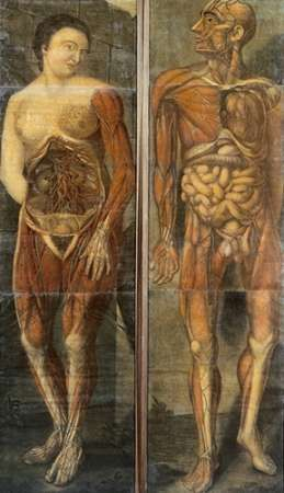 Anatomical Drawings of Male and Female Figures