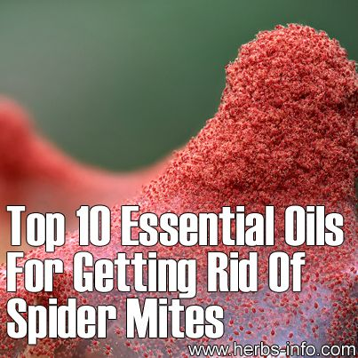 How To Get Rid Of Clover Mites Naturally