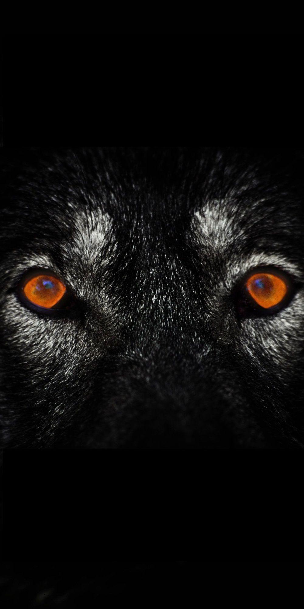 3d 4k Fbb Wallpaper Wolf Eyes Dark Iphone Wallpaper Iphonewallpapers