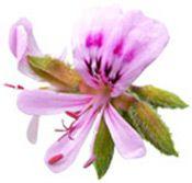 Stress - Se soigner au naturel avec les huiles essentielles