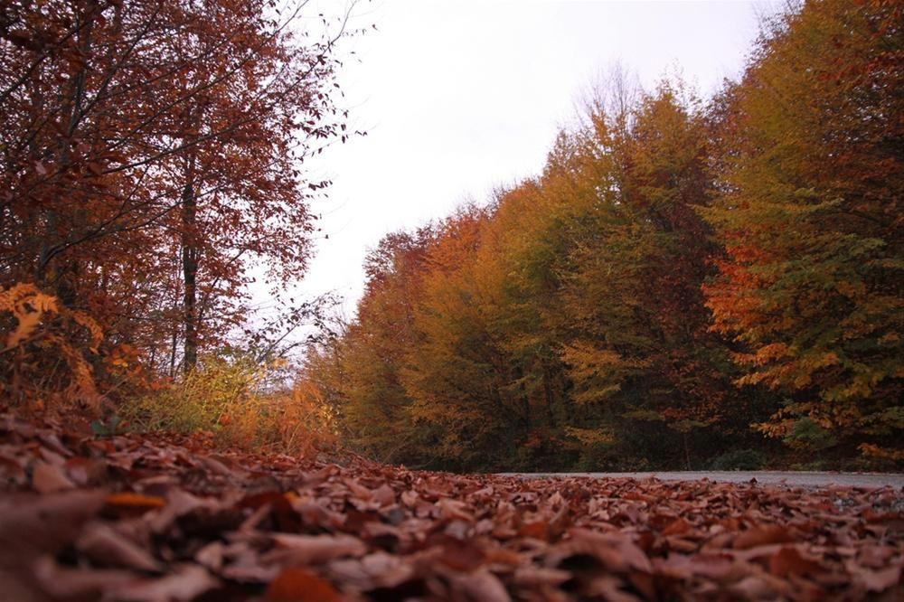 Sonbaharın son yaprakları. The last leaves of autumn in TURKEY. http://fotogaleri.ntvmsnbc.com/doga-kendini-yenilerken.html