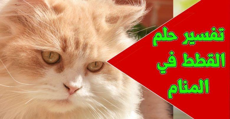 تفسير حلم القطط الصغيرة الملونة بجميع حالاتها Cats Animals Movie Posters