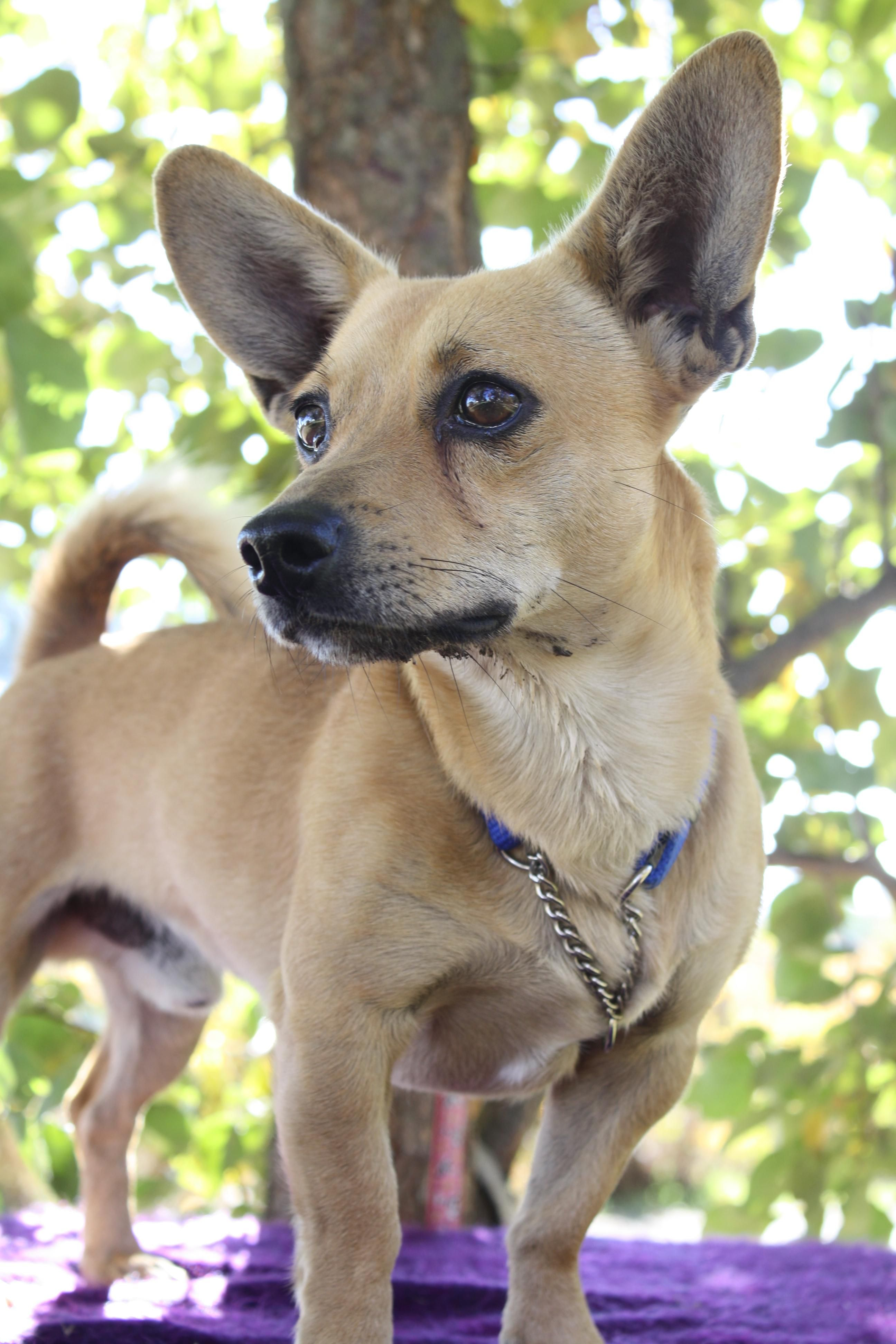Adopt DUDE on mix, Dude, Dogs