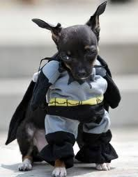 Cats And Dogs Get Ready For The Dark Knight Rises