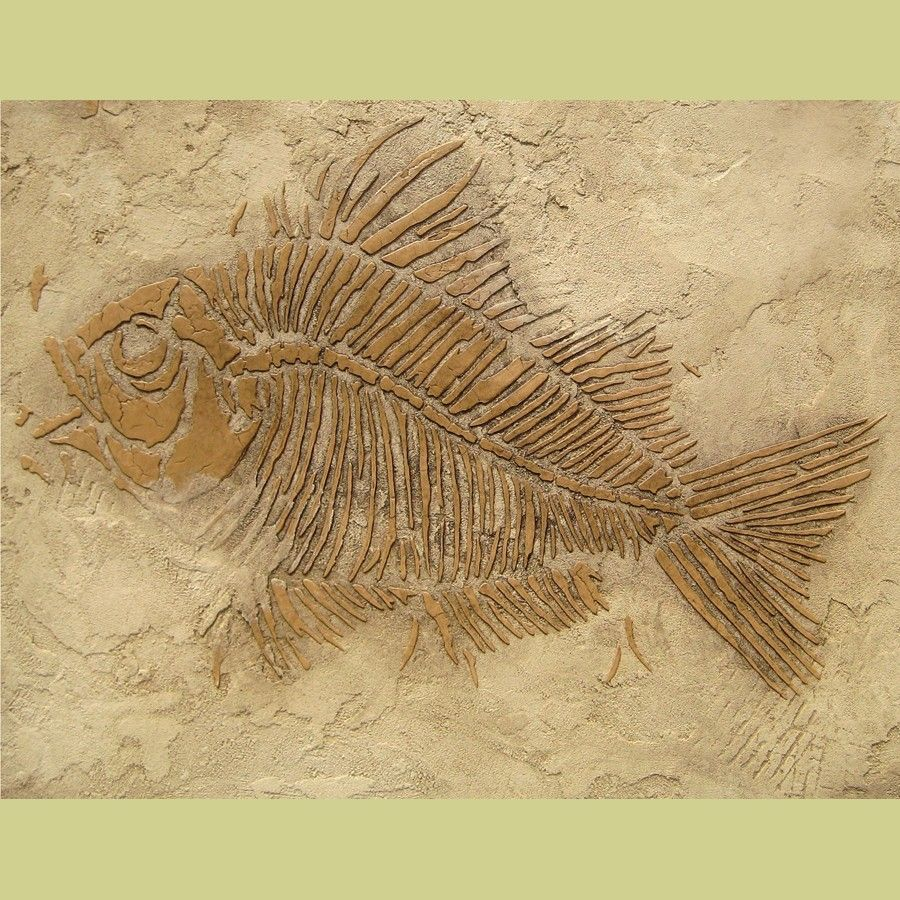 Fossilized Fish | Wall Stencil Prehistoric Fish Fossil by ...