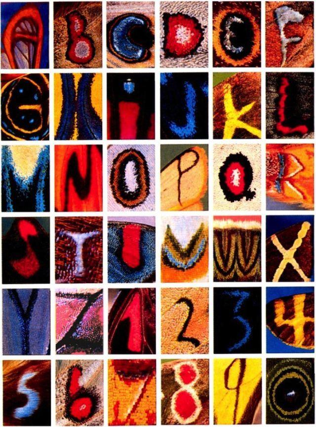 Entire Alphabet Found On Butterfly Wings @ilykenet