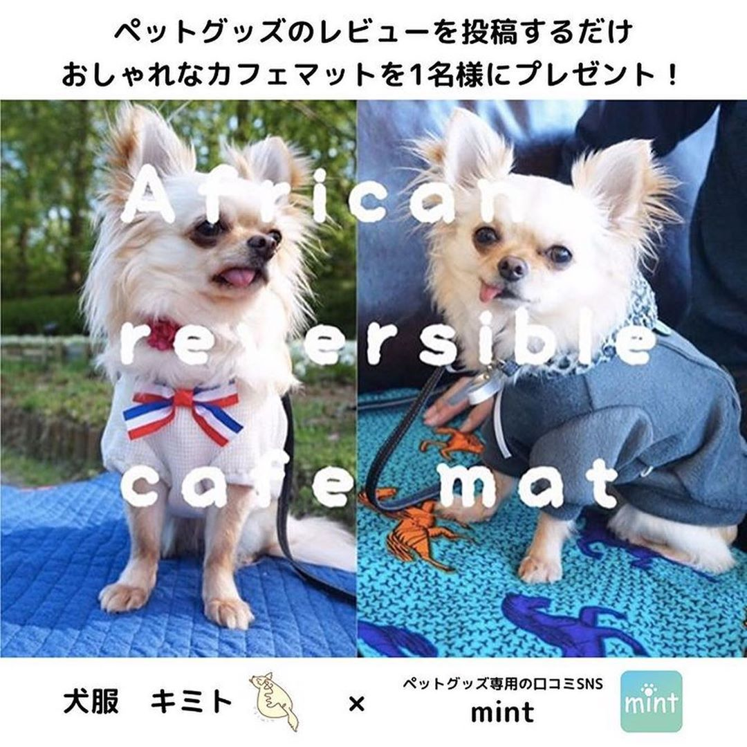 犬服 キミト On Instagram プレゼント企画 のお知らせ ペットグッズ専用の口コミsns Mint さん Mint Dog Goods とのコラボ企画で 犬服キミトの アフリカンリバーシブルカフェマット を なんと 一名様にプレゼント 犬 ペット アフリカン
