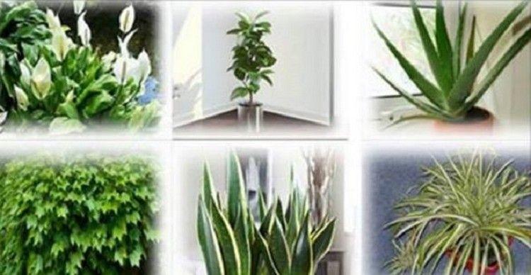 plantas que limpam o ar