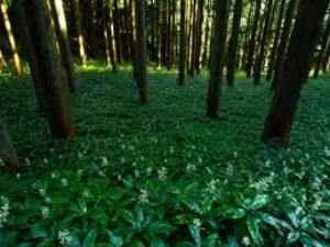 Informative Essay On Natural Vegetation In India Nature Informative Essay Expository Essay Outline