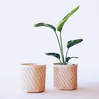 Plantas Colgantes Las Mejores Para Cestas 13