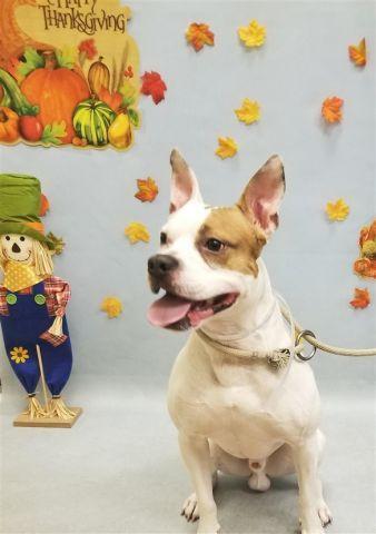 Jay Jay 12827 Animal Help Dog Adoption Cat Help