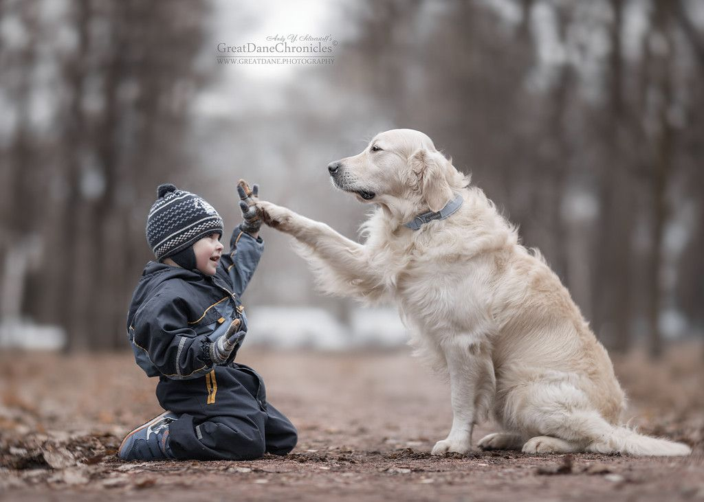 to Dog's PhotoGallery Animals for kids, Dogs and