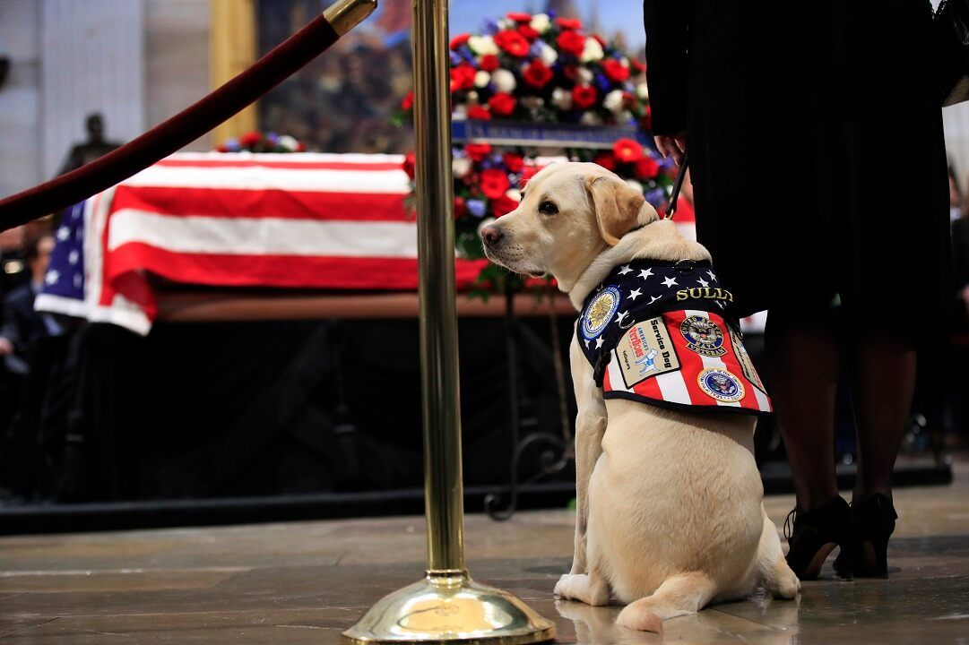 Service Dog Program Commissions Statue Of Late George H W Bush S