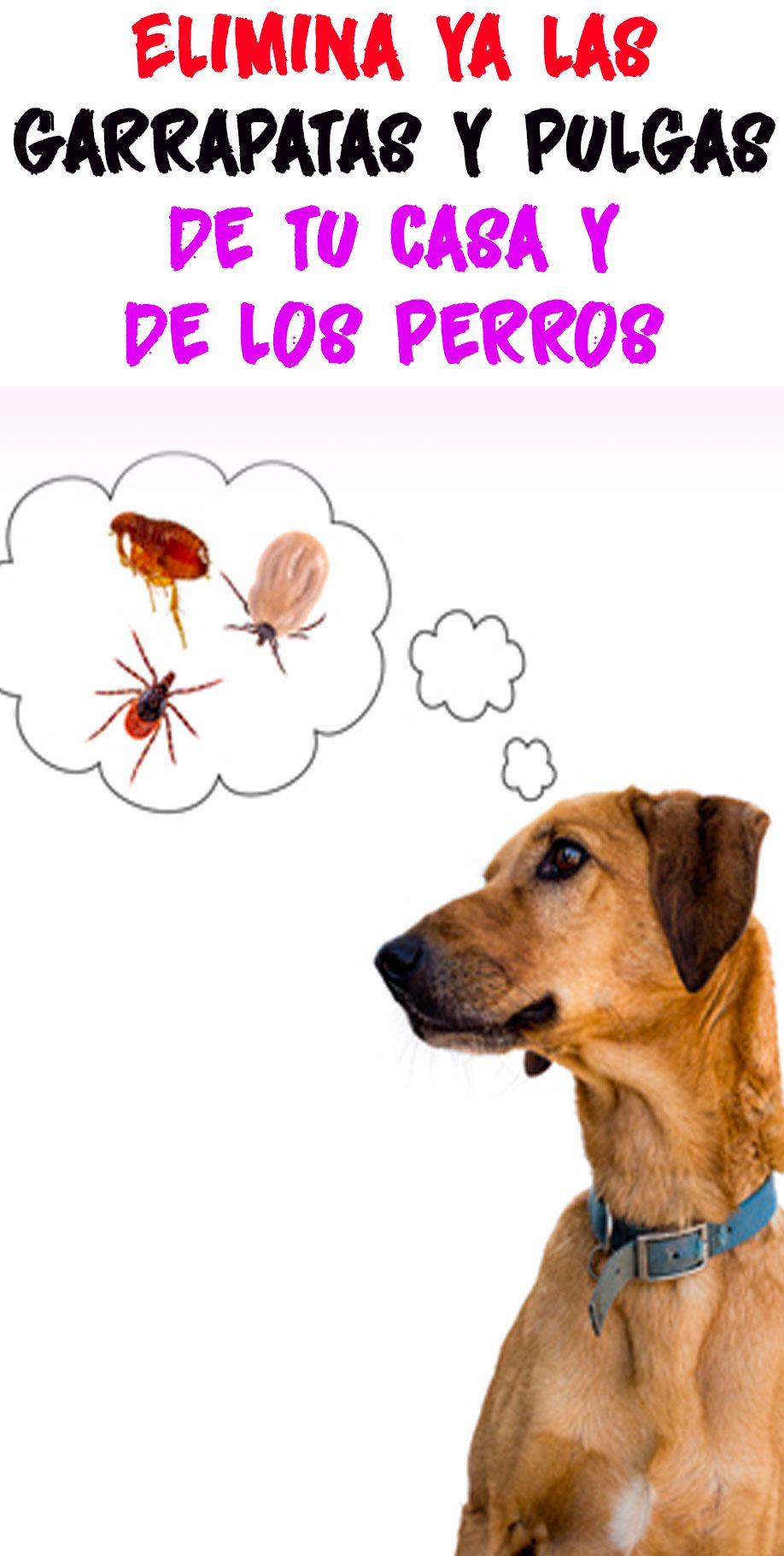 Elimina Ya Las Garrapatas Y Pulgas De Tu Casa Y De Los Perros Animal Lover Pets Animals And Pets