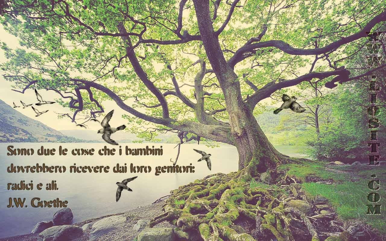 Piantare Alberi Di Paulonia citazione   piantare alberi, radici degli alberi, alberi