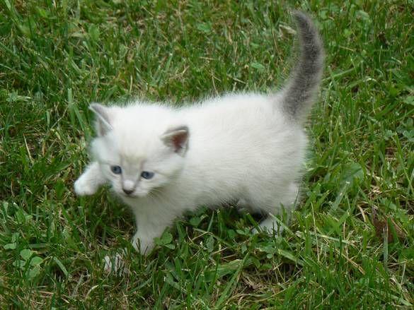 Little Kitten Hyden Photo Album Topix Cute Little Kittens Cats And Kittens Little Kittens