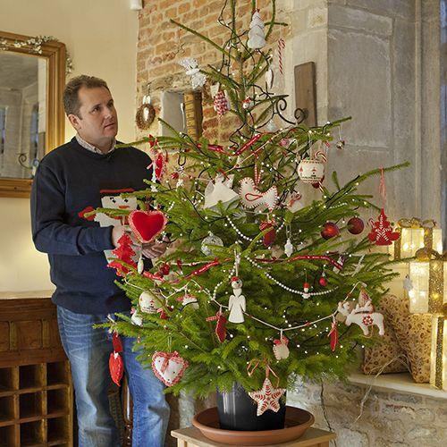 Potted Christmas Trees For Sale: Pot-grown Living Christmas Tree