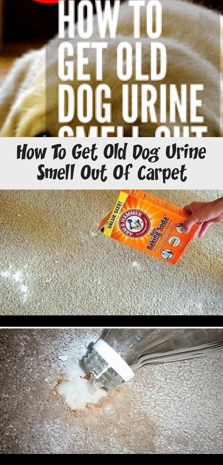How to get old dog pee smell out of carpet whole house