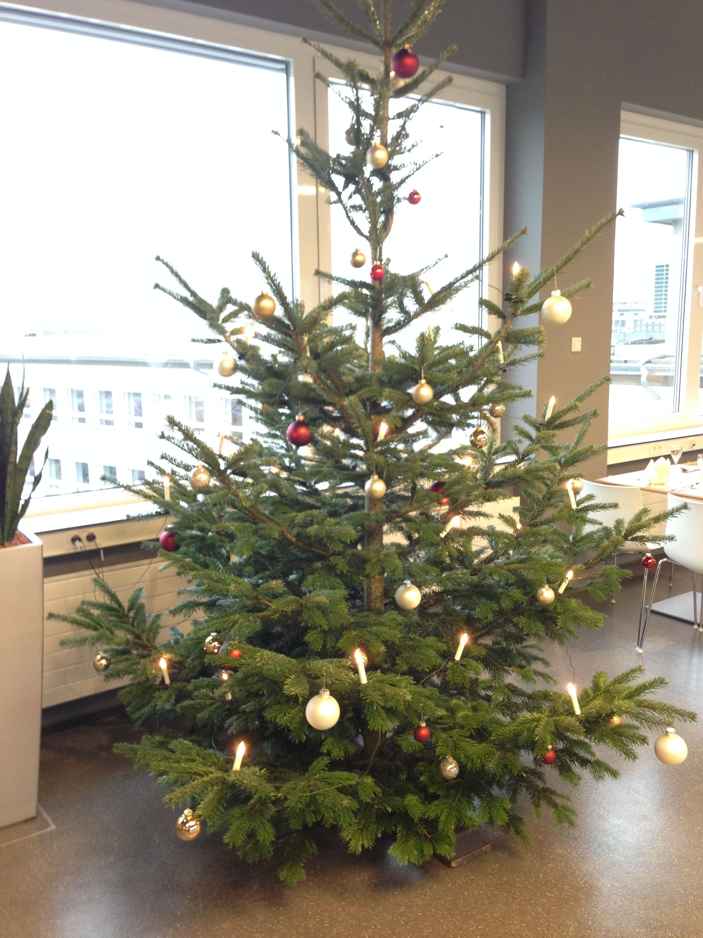 Vogel Christmas tree 2013