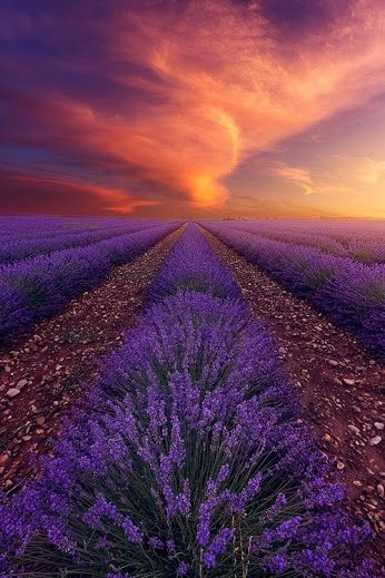Cudowny Swiat Natury/The wonderful World of Nature - Community - Google+