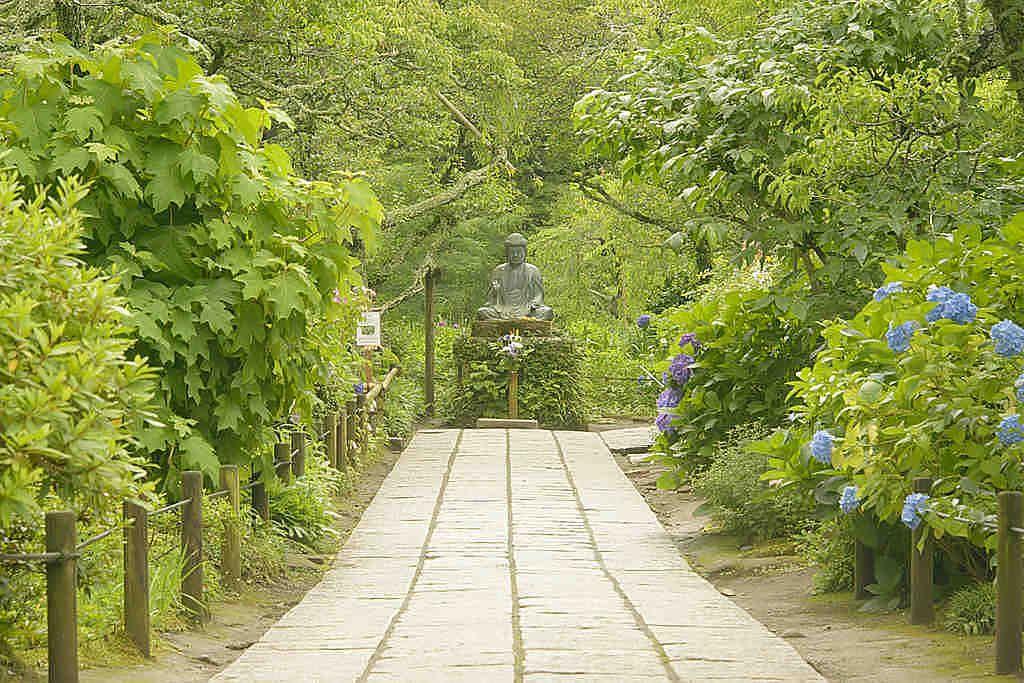 紫陽花の参道。