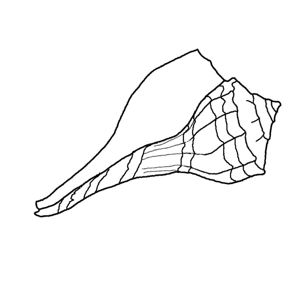 Printable coloring pages of seashells - Seashell Sun Snake Spider Kids Coloring Pages Free Printable Coloring Seashell Coloring Pages Prints And Colors