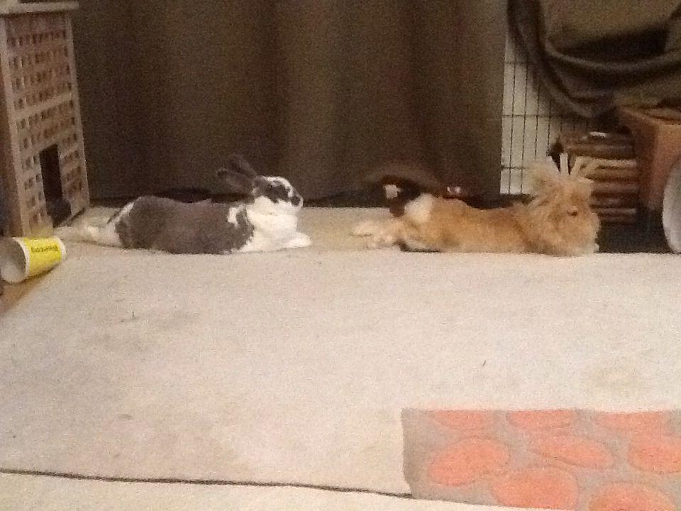 Pin auf To build a rabbitat