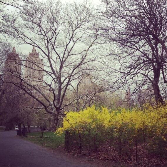 Twitter / emilyvdriscoll: Spring finally arriving in Central Park