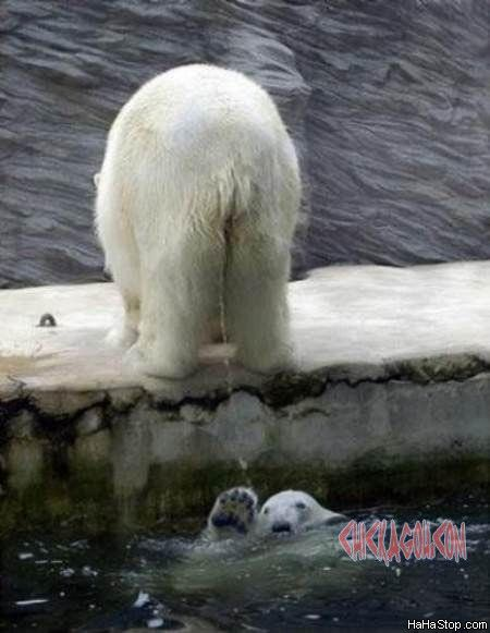 Hahaha, OMG look at this The Polar Pee