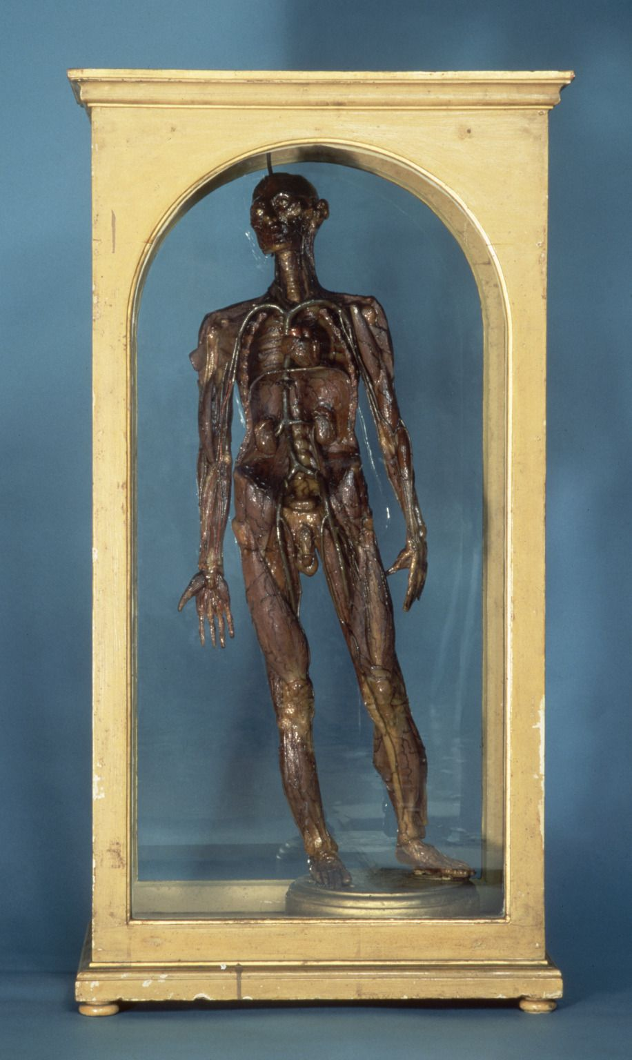 Wax male figure showing the muscles and bones of the body, Florence ...
